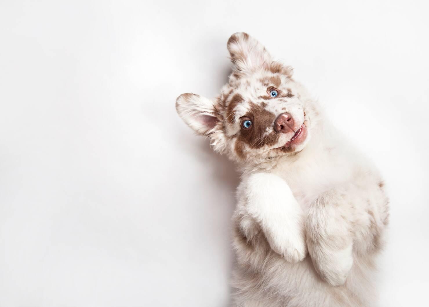 Endoscopen voor Honden